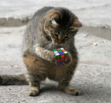 Can this cat solve this rubik's cube?