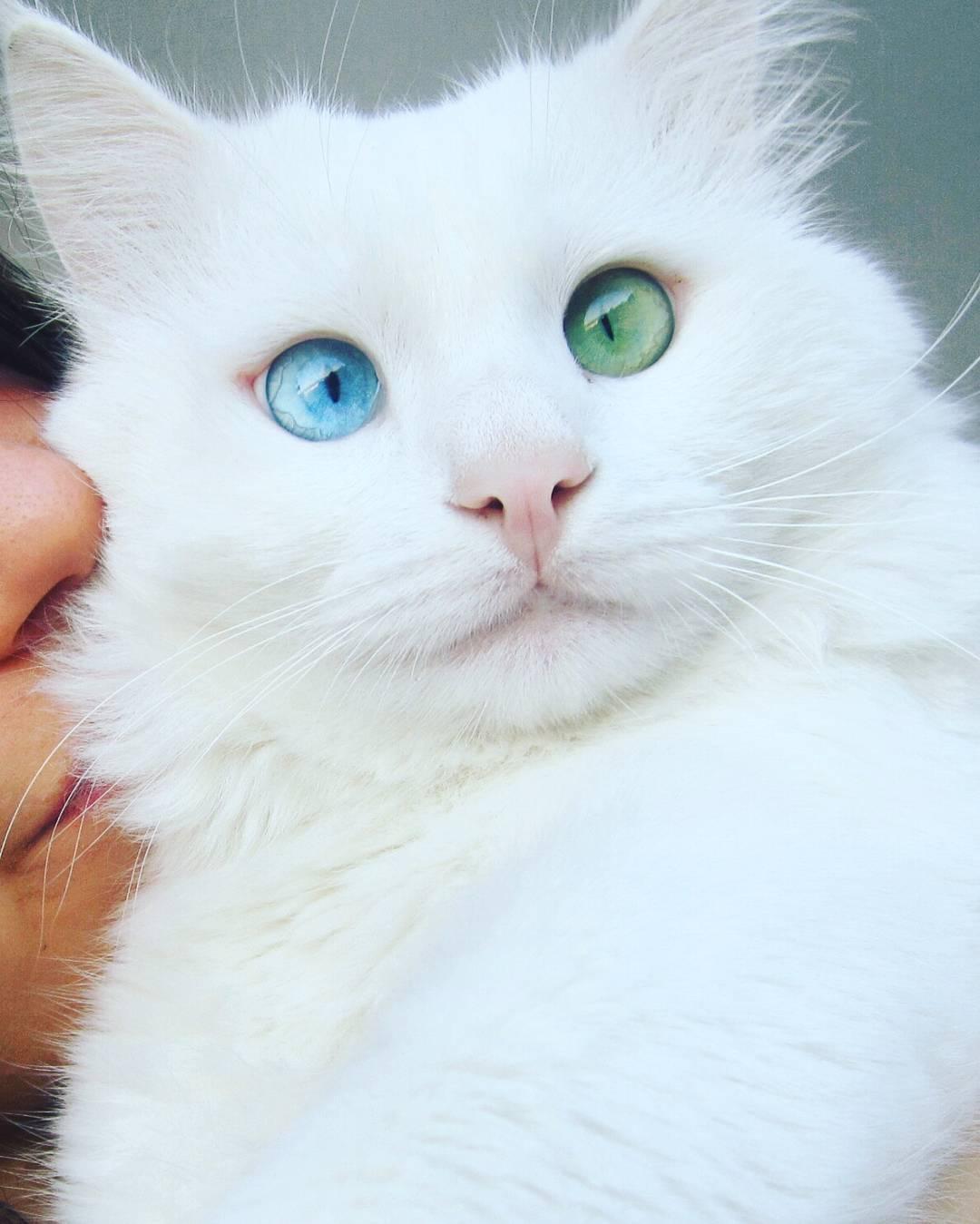 Racist Cat